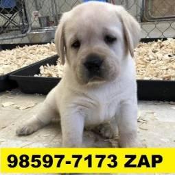 Canil em BH Filhotes Cães Labrador Golden Pastor Akita Rottweiler Boxer