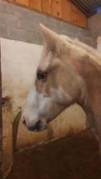 Título do anúncio: Cavalo crioulo