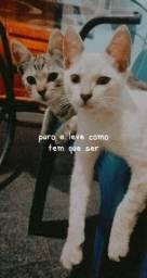 Gatinhos(a) para adoção. ;)