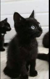 Título do anúncio: Gatinha pra adoção