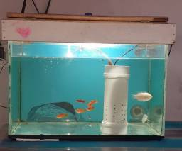Bíblia e aquário