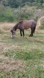 Vendo cavalo de 3 anos