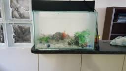 Aquário para peixes usado