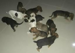 Doação de cachorrinhas