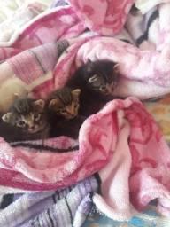 Doação de 4 gatinhos