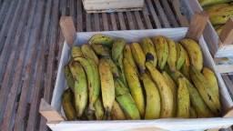 Vendo banana da terra banana de fritar. 40 reais a caixa com 24 kg