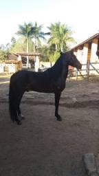 Cavalo garanhão fatal FTR do cisney