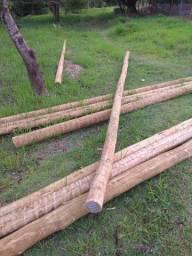 Lote de postes de eucalipto tratado.