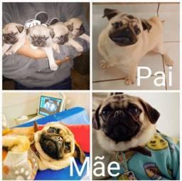 Título do anúncio: Pug