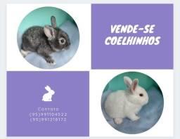 Título do anúncio: Filhotes de Coelho Branco e cinza