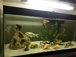 Vendo aquário completíssimo