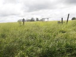 Arrendo Fazenda entre Jáguapita e Guaraci