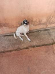 Cachorrinho de 4 meses para adoção