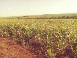 Fazenda com 42alq pra cana, em Frutal!!