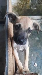 Doação de Cachorro Macho Porte P