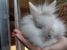 Título do anúncio: Filhotes de coelhos anões