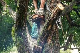 Corte poda de árvores jardinagem em geral