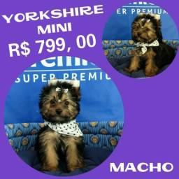 Disponível Yorkshire Mini Macho + Microchipe + Parcelado 12X