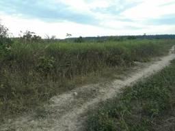 Fazenda em Ulianópolis-Pa, Dupla aptidão