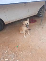 Cachorro pra doação