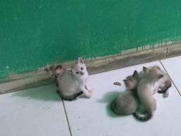 To doando esses gatinhos