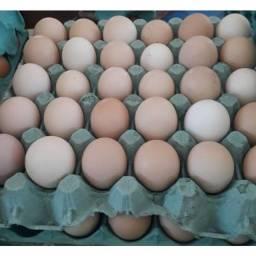 Ovos de galinha caipira 1,99 a dúzia!!