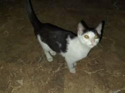 Título do anúncio: Doação gatinhos