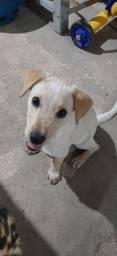 Cachorro pra doação!!