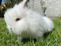 Título do anúncio: Mini coelho.
