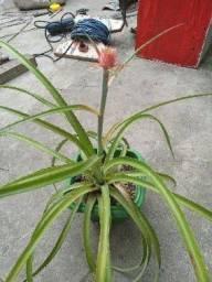 Título do anúncio: Lindas mudas de plantas,descupe não coloquei o nome porque não sei.