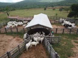 Título do anúncio: Fazenda à venda,  m² por R$ 16.000.000,00 - Formoso - Bonito/MS