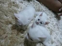 Gatinhos para adoção ?