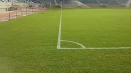 Gramas Campos de futebol
