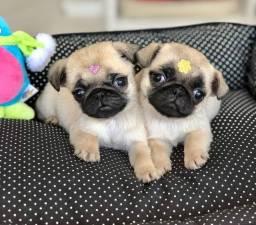 Título do anúncio: Filhotes Pug disponíveis!!