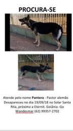 Cachorro desaparecido
