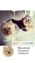 Yorkshire Babys