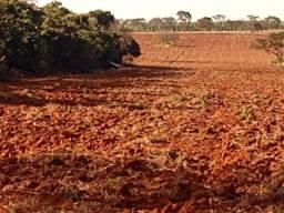 Terreno 40 Hectares em Martinho Campos