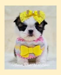 Título do anúncio: Shih tzu linda baby 'fotos reais' - Namu Royal Pet Shop