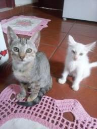 Estou doando esses dois gatos