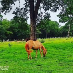 Fazenda à venda, ZONA RURAL - Nioaque/MS