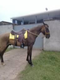 Cavalo bagua