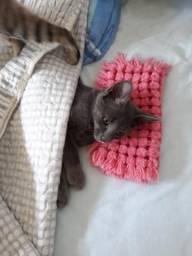 Gato angorá 8 meses de vida