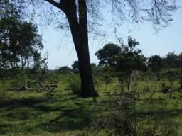 Ótima fazenda dois Irmão buritis 100 hectares