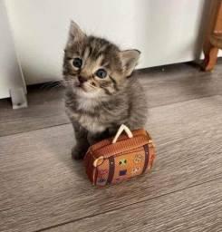 Precisa de um amiguinho? Adoção de 2 gatinhas