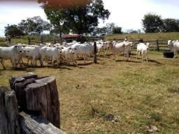 Excelente fazenda 550 hectares há 20 km de Curvelo, 1 km margem de rodovia