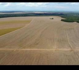 Fazenda 1.853 hectares, 1.100 há em lavoura, Beira Rio