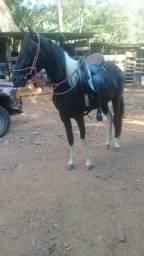Cavalo mm 2anos e 5 meses mancha picada