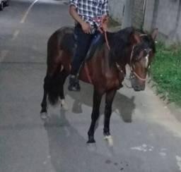 Troco e negócio em cavalo jeitoso