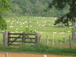 Fazenda em Porto Murtinho-MS, Excelente Negócio