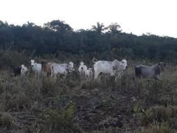 Chácara de terra boa a 9 km de Acorizal